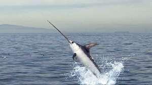 Swordfish nutritional value