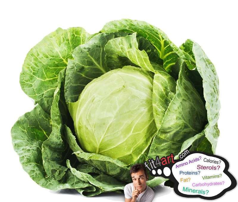 Cabbage Nutritional Value And Information